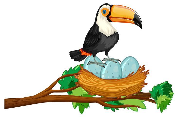 toucan sitter på boet av ägg vektor