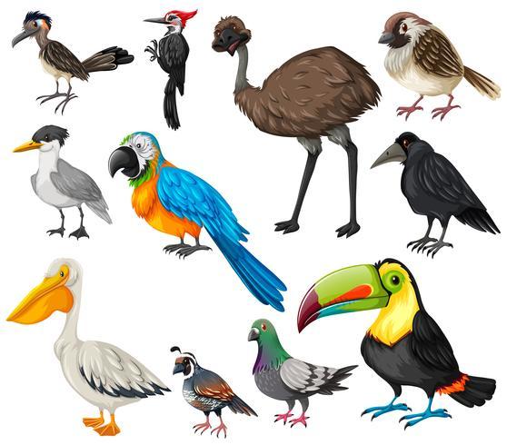 Olika typer av vilda fåglar vektor