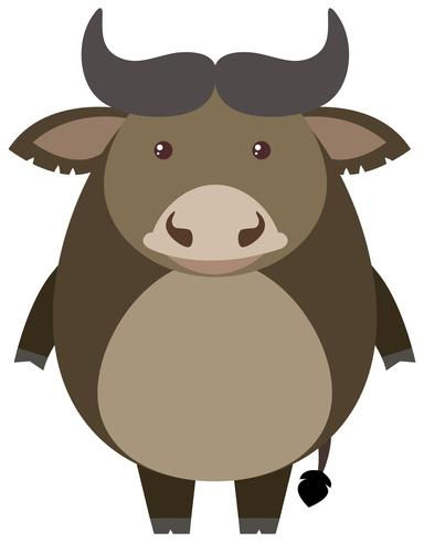 Büffel steht auf weißem Hintergrund vektor