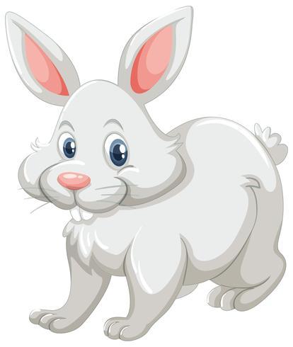 Gullig kanin med vit päls vektor