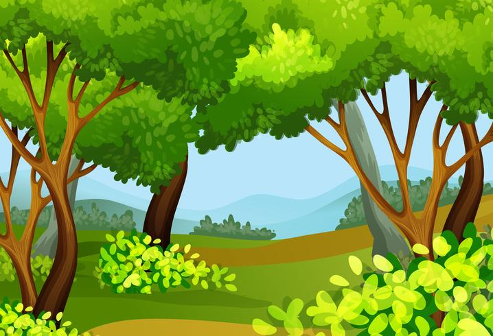 Waldszene mit hohen Bäumen vektor