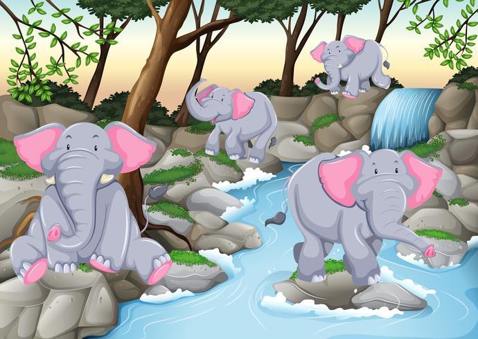 Vier Elefanten am Wasserfall vektor