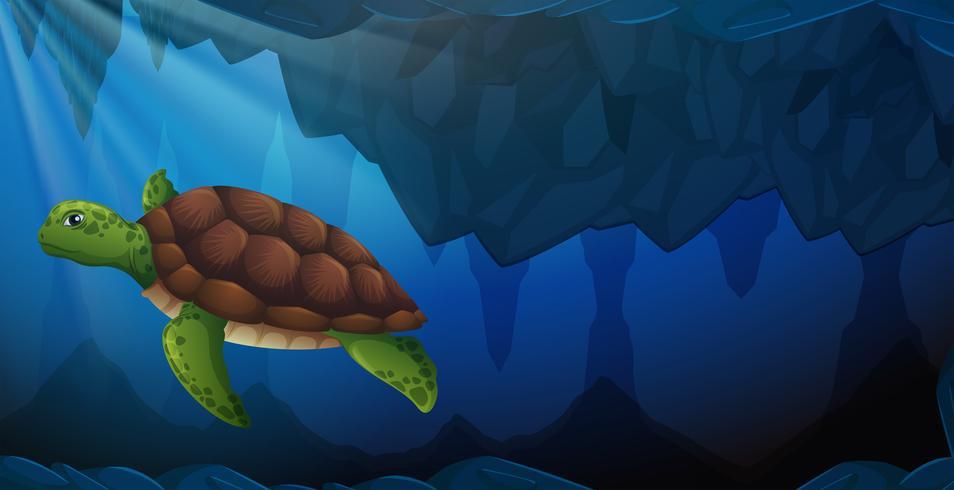 Eine grüne Meeresschildkröte unter Wasser vektor