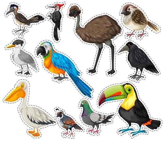 Aufklebersatz mit vielen Vögeln vektor