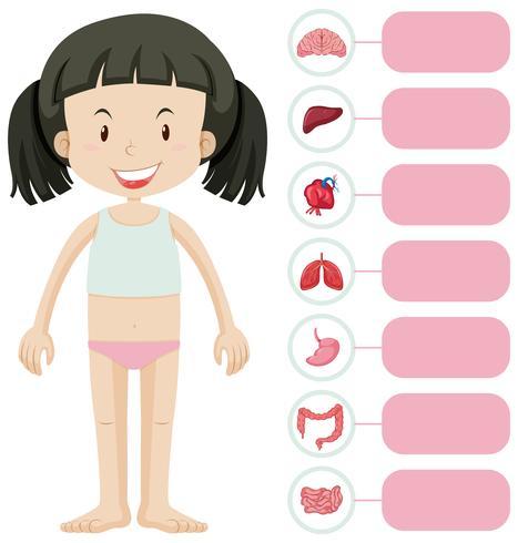 Liten flicka och olika kroppsdelar vektor