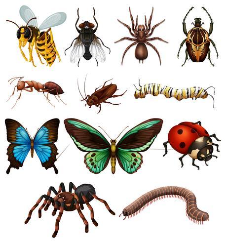 Sats av olika vilda insekter vektor