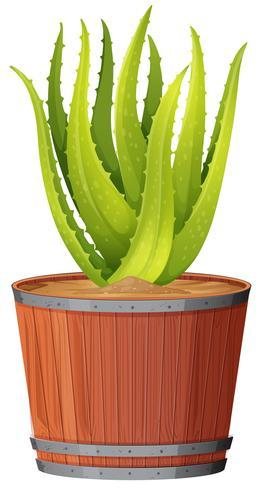 Aloeanlage im Topf vektor