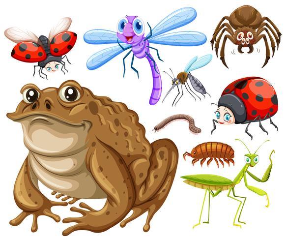 Andere Arten von Insekten vektor