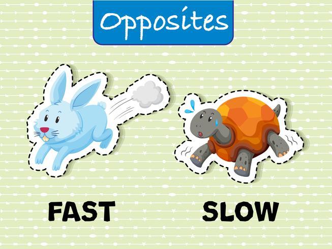Gegensätzliche Wörter für schnell und langsam vektor