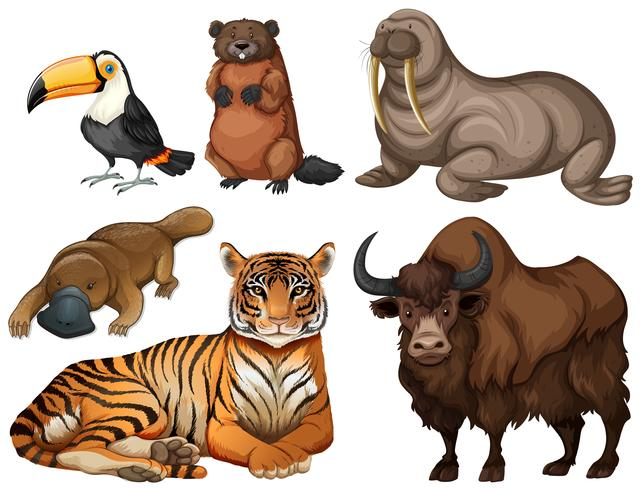 Verschiedene Arten wilder Tiere vektor