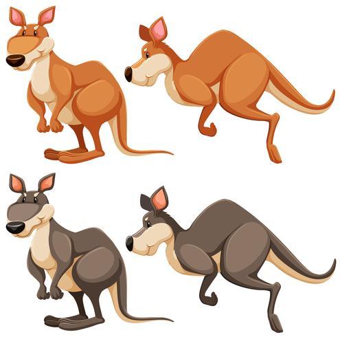 Känguru vektor