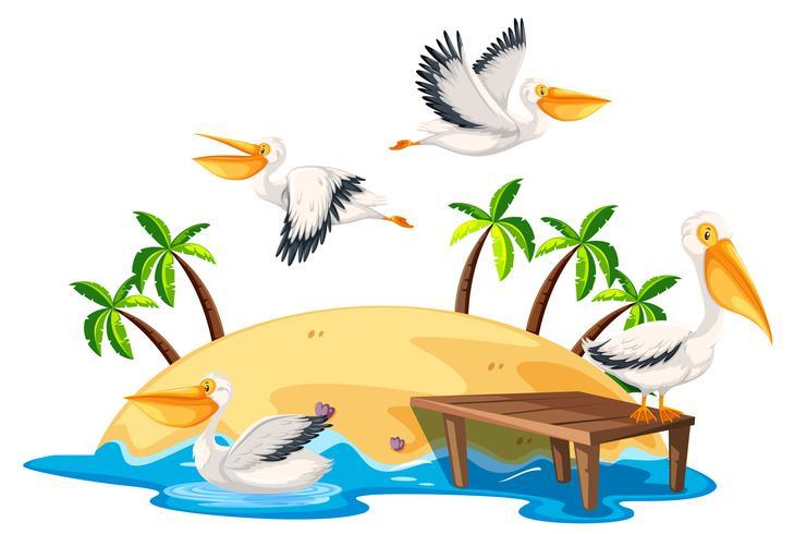 Pelikan in der Naturinsel vektor