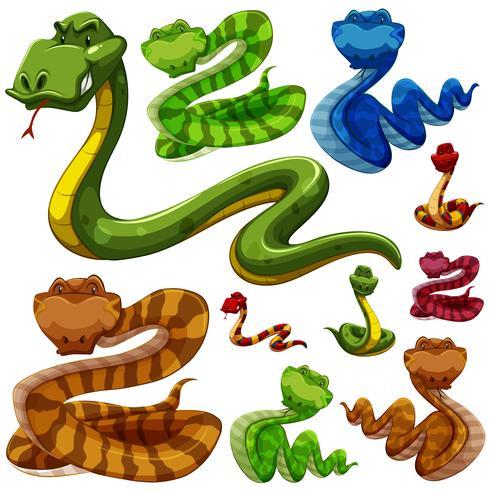 Sats av olika typer av ormar vektor