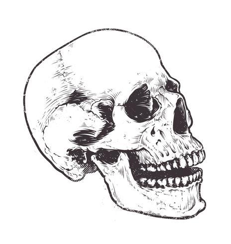Anatomisk skallevektor vektor