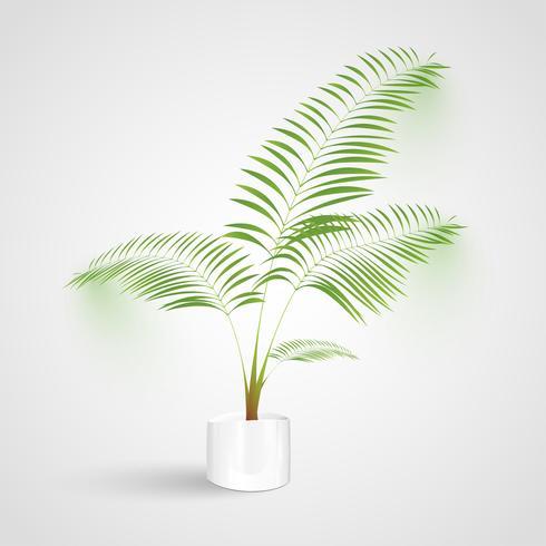 Växt på vit bakgrund, vektor