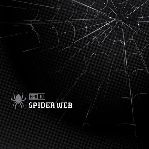 Vektor-Spinnennetz auf Schwarzem vektor