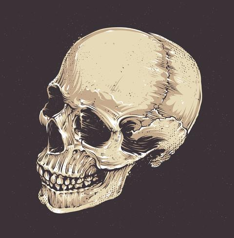Anatomisk Grunge Skull vektor