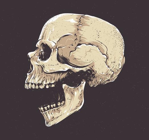 Anatomischer Grunge-Schädel vektor