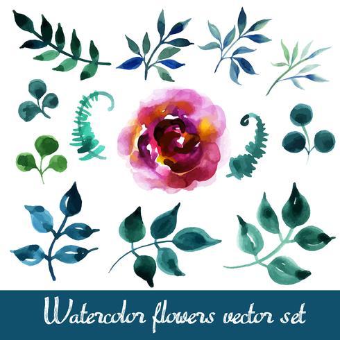 Set schöne Aquarellblumen vektor