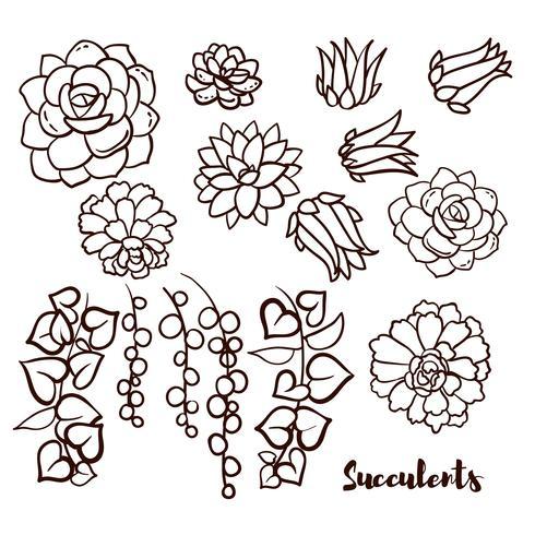 Sukkulenten in der Hand gezeichneten Art eingestellt. vektor