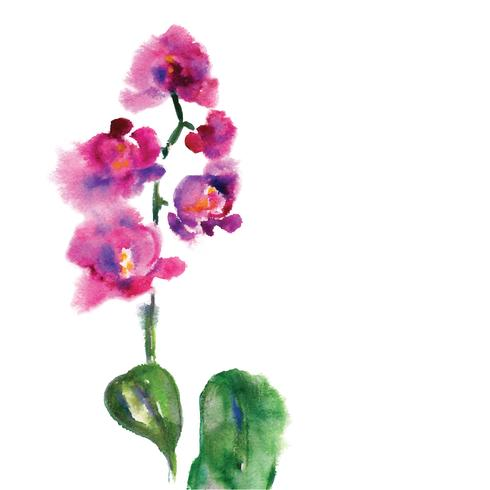 Rosafarbene Orchidee getrennt auf Weiß vektor
