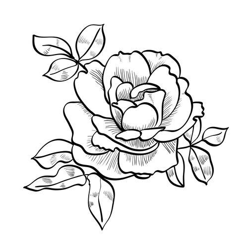 Bleistiftskizze der Rose vektor