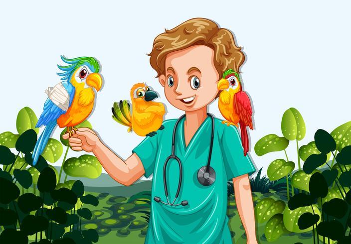 En manlig veterinär sjuksköterska och papegojor vektor