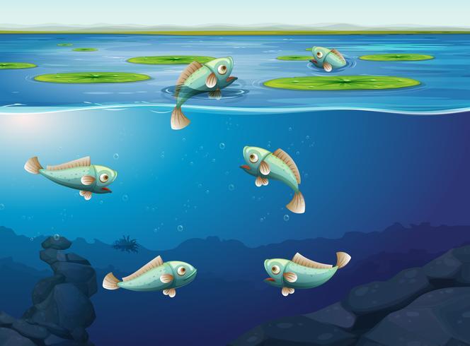 Set med fisk under vatten vektor