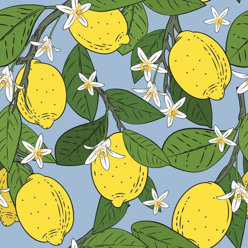 Nahtloses Muster von Niederlassungen mit Zitronen, Grünblättern und Blumen auf Blau. Zitrusfrüchte Hintergrund. Vektor-Illustration vektor