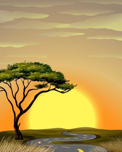 Straße zum Savannenfeld bei Sonnenuntergang vektor