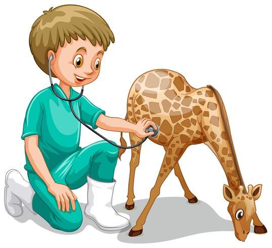 Ein männlicher Tierarzt überprüfen herauf Giraffe vektor