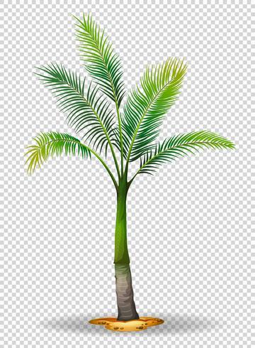 Palm på transparent bakgrund vektor