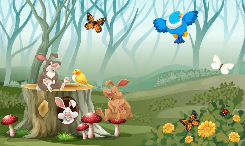 Kaniner och fåglar som bor i skogen vektor