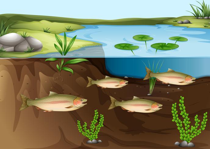 Ein Ökosystem unter dem Teich vektor