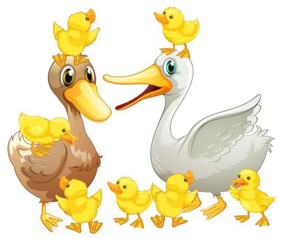 Entenfamilie mit kleinen Entlein vektor