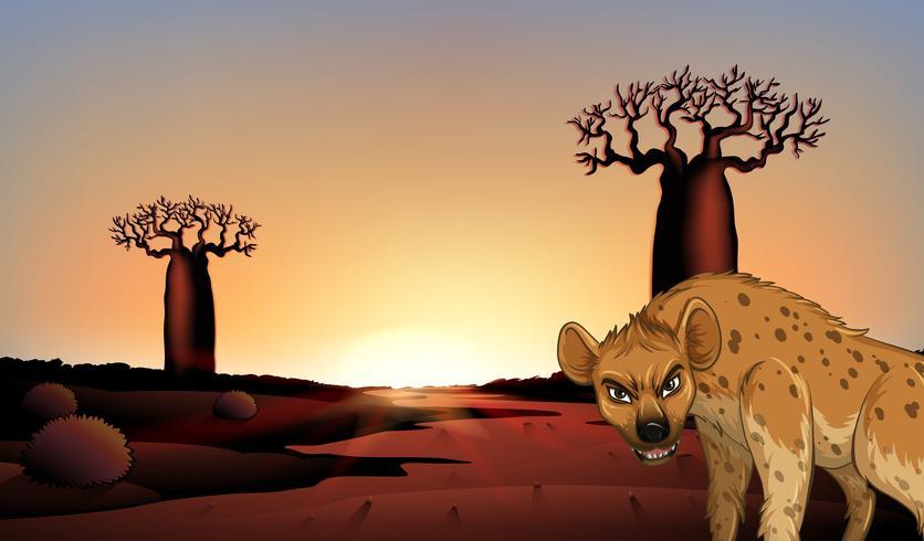 Hyäne auf dem Feld vektor