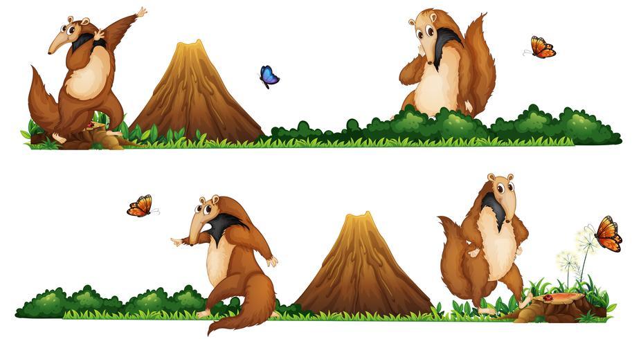 Anteaters gehen auf dem Feld vektor