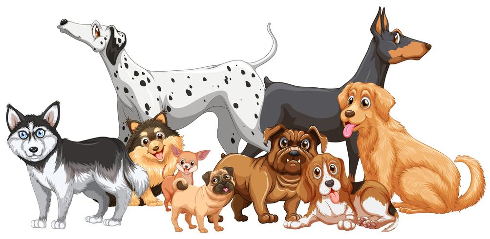 Gruppe von verschiedenen Arten von Hunden vektor