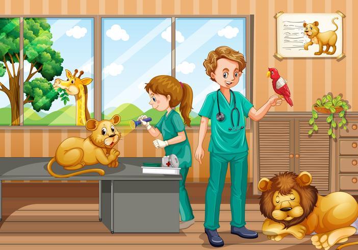 Två veterinärer som ger behandling till vilda djur vektor
