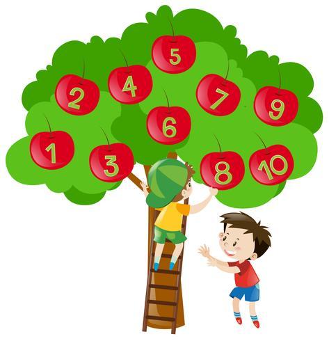Att räkna siffror med äpplen på trädet vektor