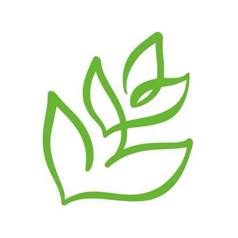 Logo av grönt blad av te. Ekologi naturelement vektor ikon trädgård. Eco veganisk bio kalligrafi handritad illustration