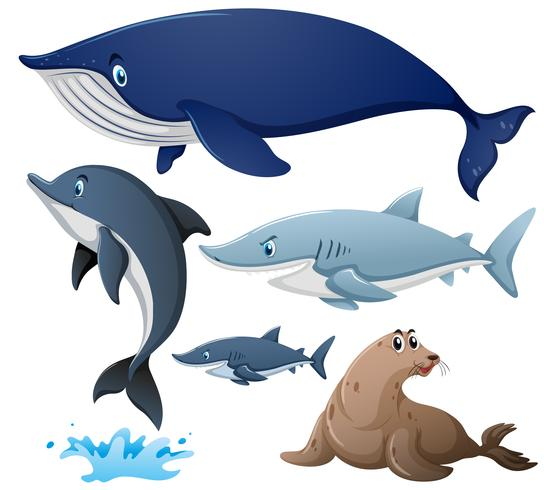 Haie und andere Meerestiere vektor