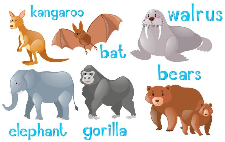 Olika typer av vilda djur vektor
