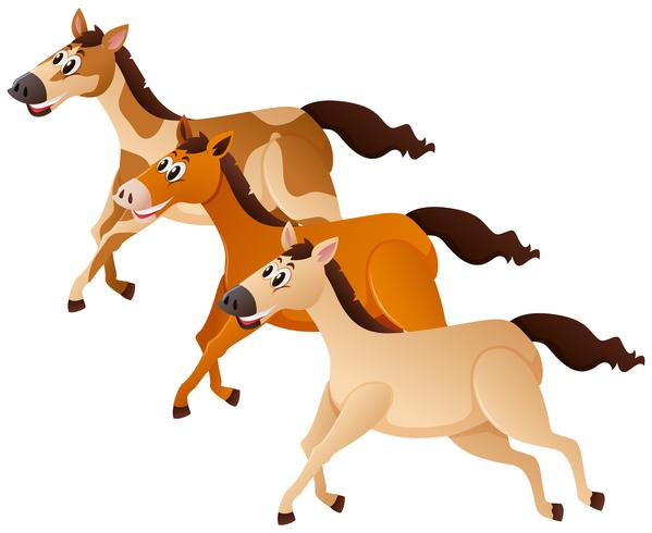 Tre hästar som går i grupp vektor