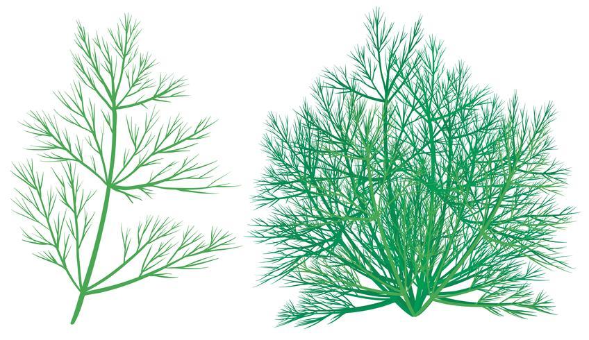 Grön växt på vit bakgrund vektor