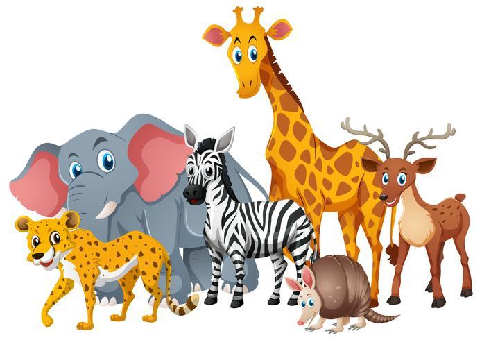 Vilda djur tillsammans i grupp vektor