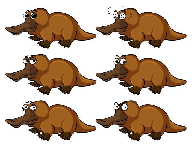 Platypus med olika ansiktsuttryck vektor