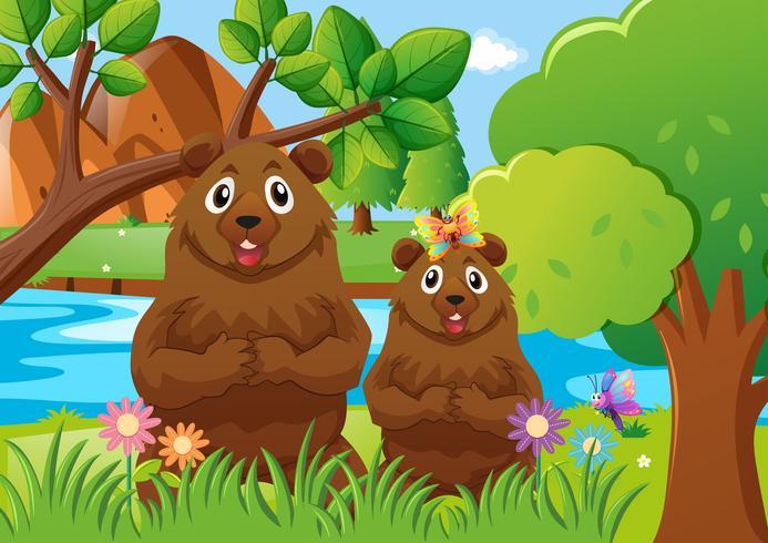 Två björnar i skogen vektor