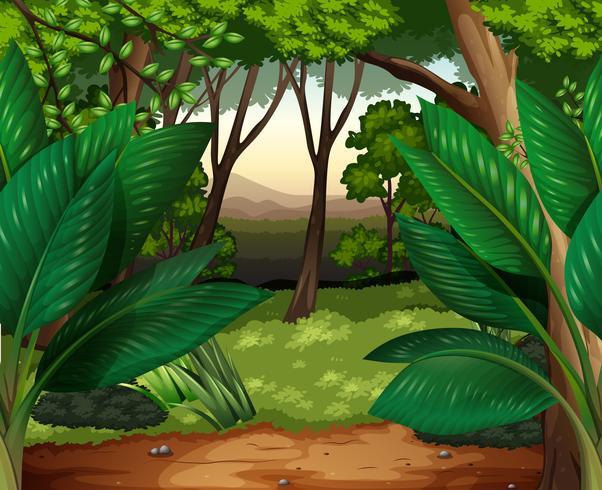 Waldszene mit vielen Bäumen vektor