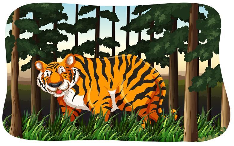 tiger vektor
